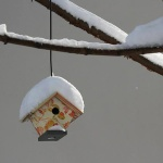 birdhouse-web